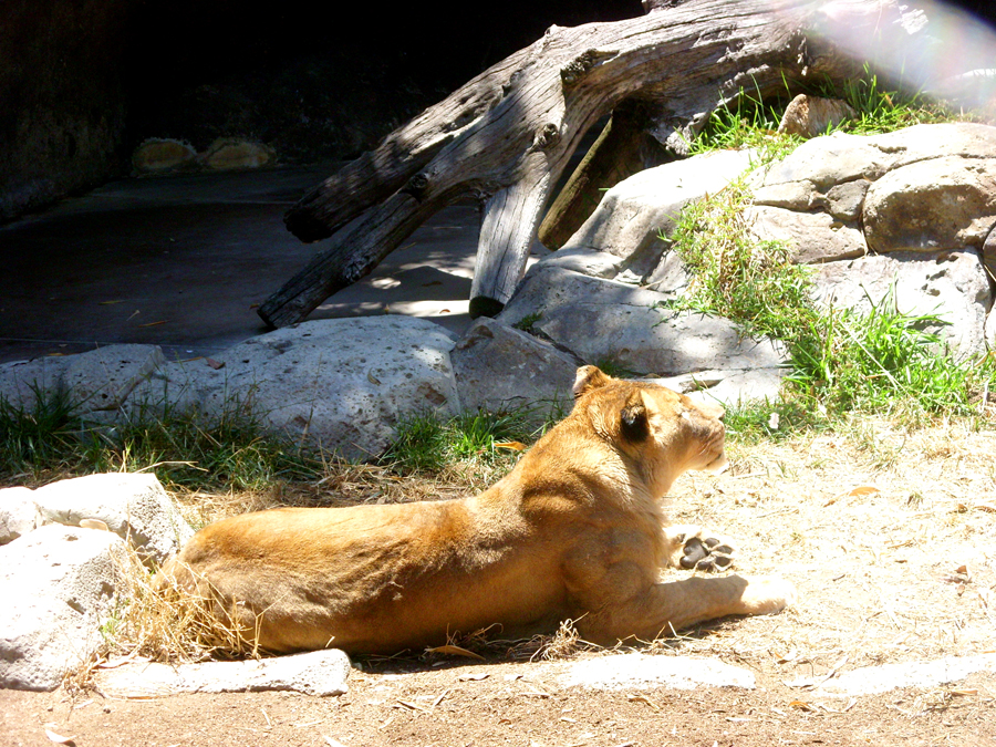 San Diego Zoo 7715.jpg