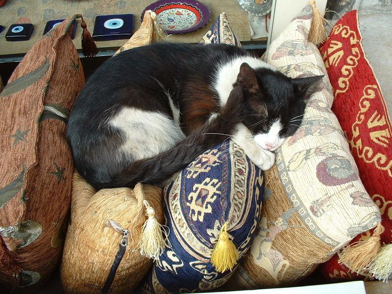 Spoiled kedi outside a shop