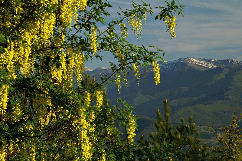 Mount Vodno