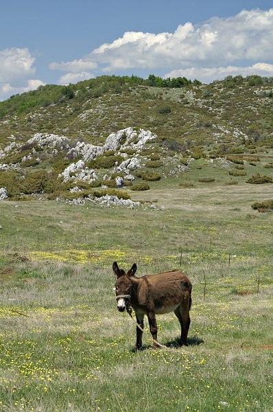 Donkey in Galičica National Park