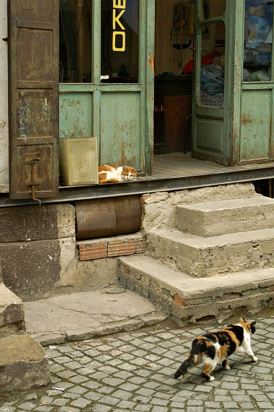 Bitola - cats in the old bazaar