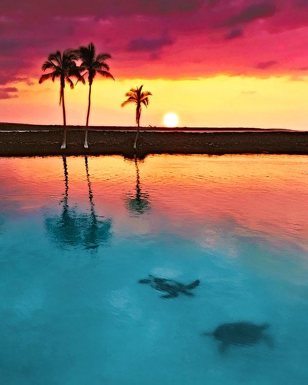 Turtles swimming at sunset