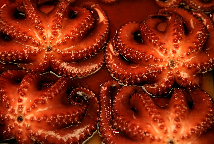 Octopus pattern - Akashi