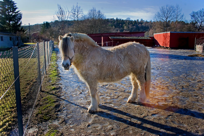 Winter-Horse