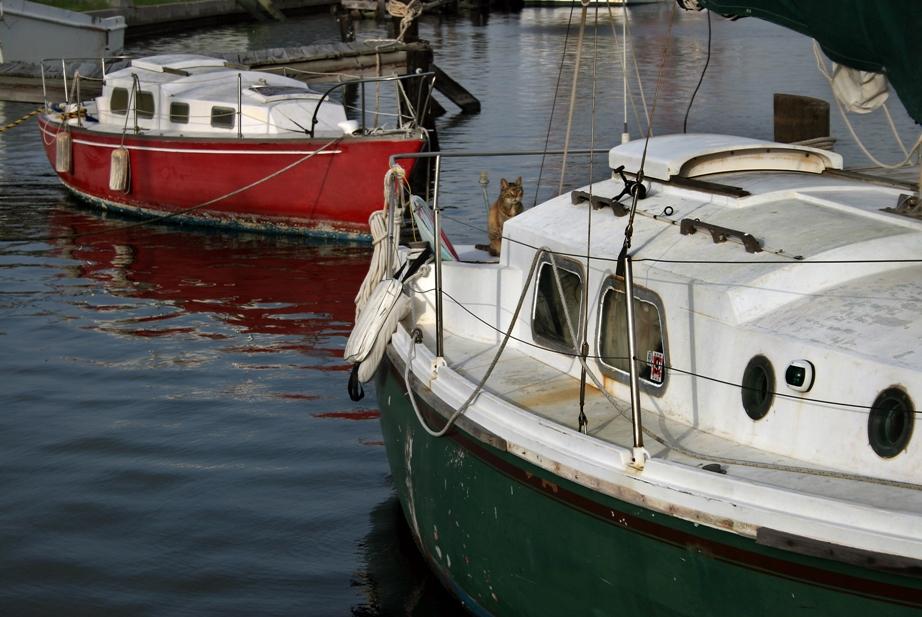 Conn Brown Harbor:  Captain Kitty