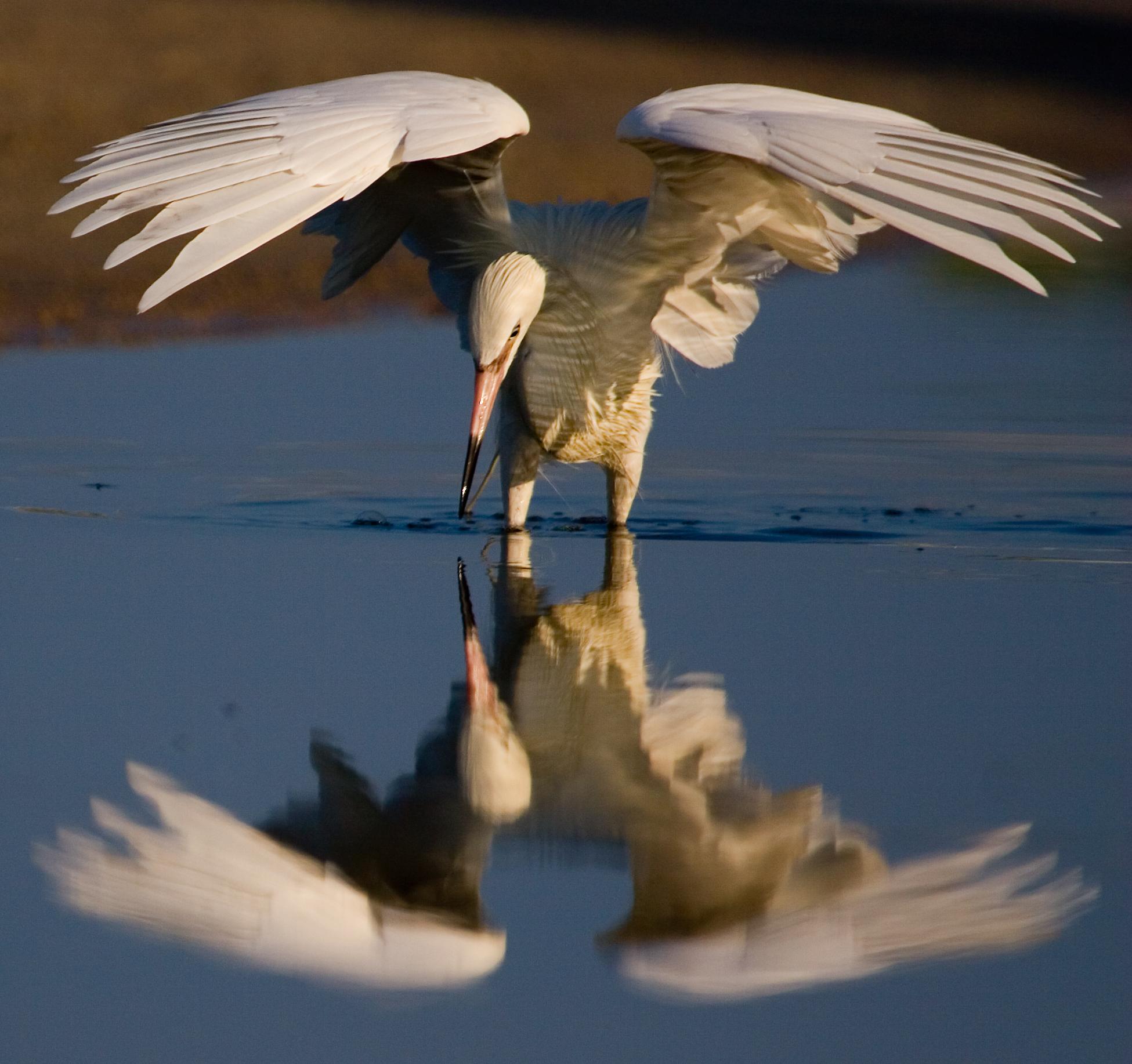 Angel Wings (Award Winner Bayfest 08)