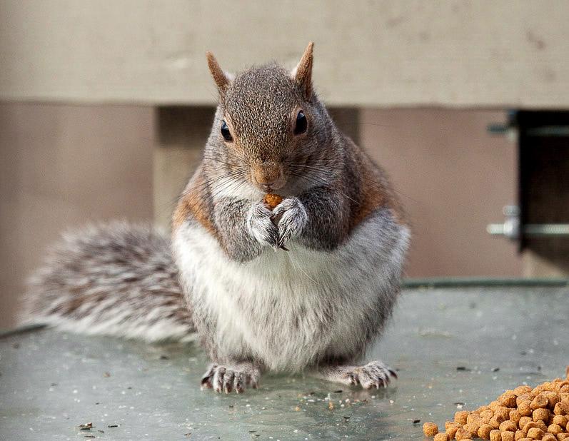 _MG_0130 Eating cat food