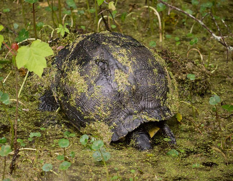 P1040326 Turtle