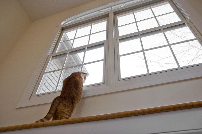 _MG_6237 Cat Shelf