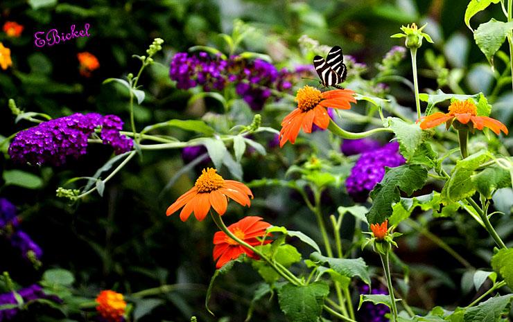 A Butterflys Dream World