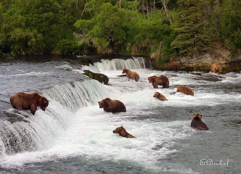 Bears Everywhere!