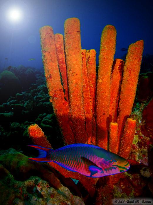 Parriot Sponge Surprise