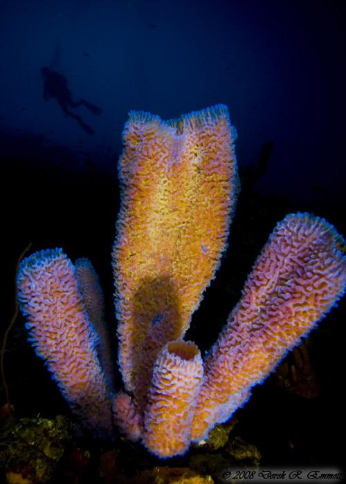 Sponge Splendor