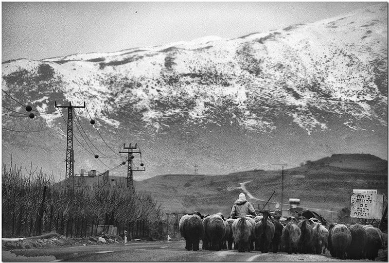 Druse Shepherd in the Golan.jpg