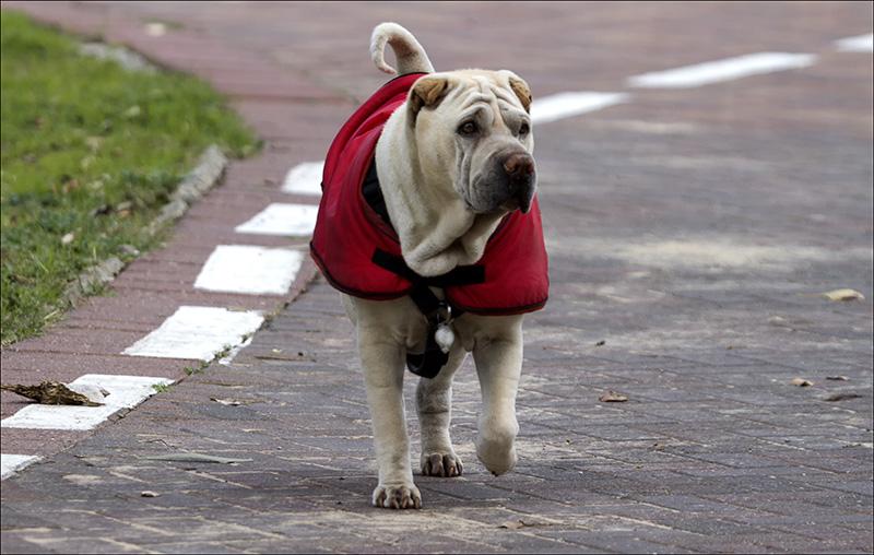 The Well-dressed Winter Pooch.jpg