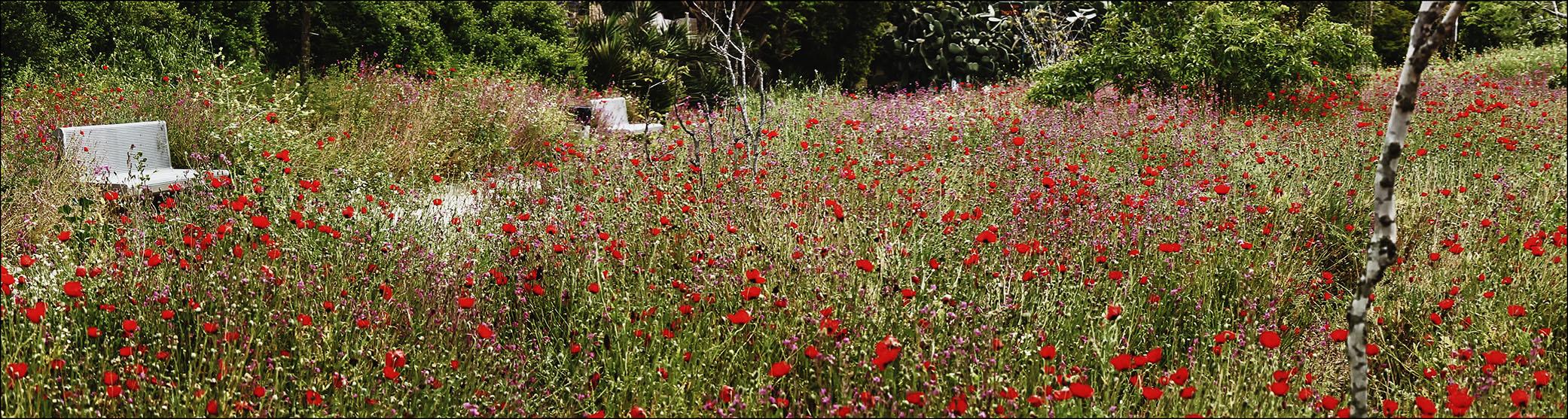 My secret garden 3.jpg
