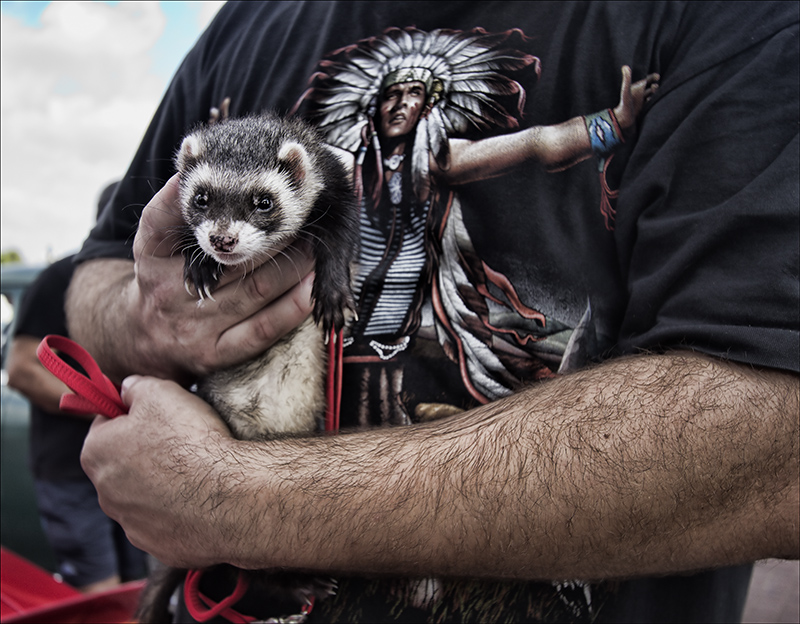 The Irony of the Pet Ferret and the Indian T-Shirt