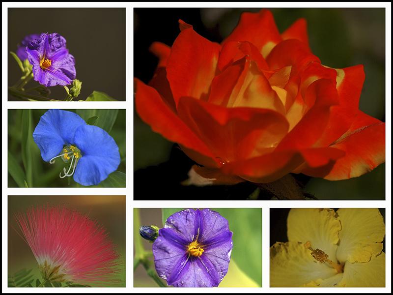 Morning Macro Collage in One Garden.jpg