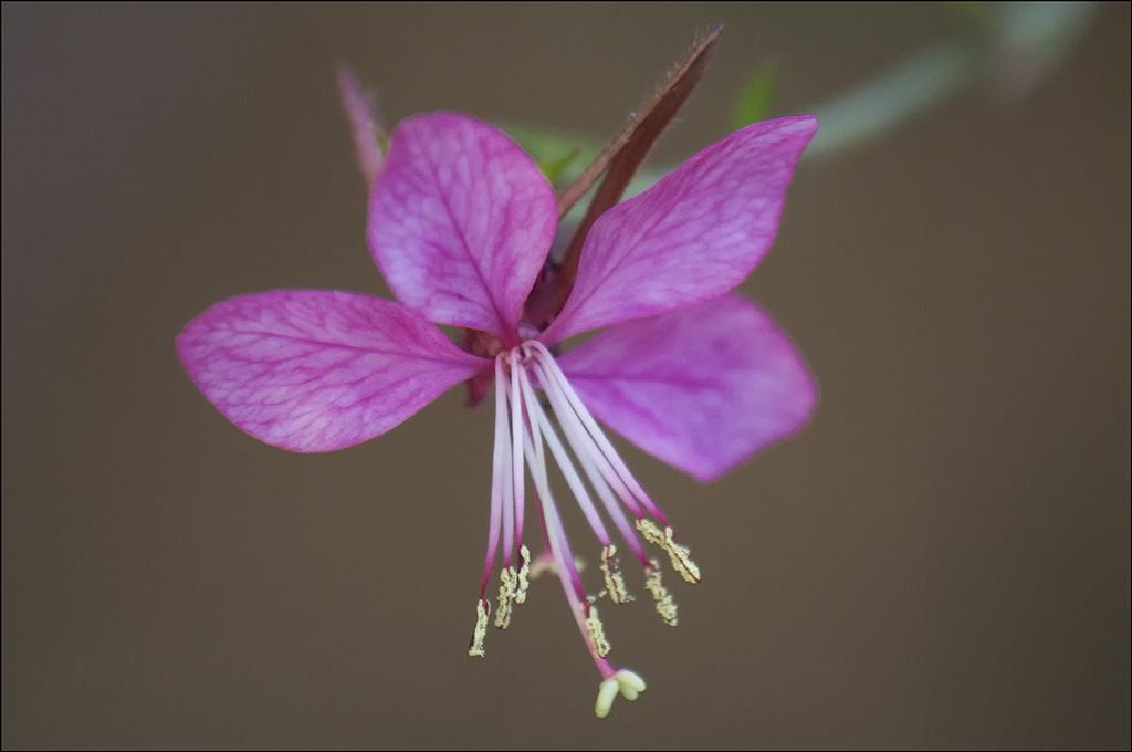 Tiny Pink Macro.jpg