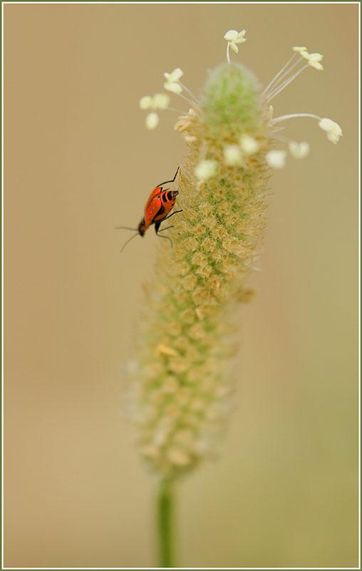 Macro of a Bug.jpg