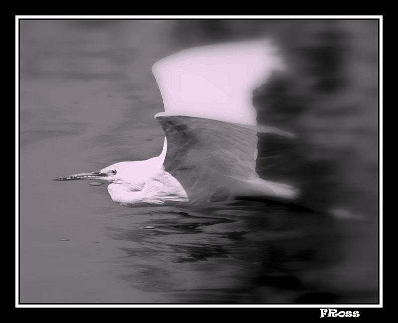 The Heron.jpg