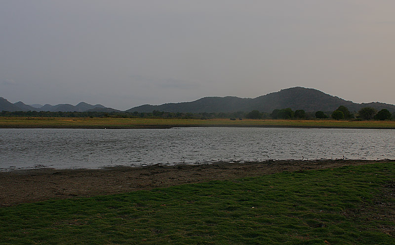 Minneriya lake at dusk