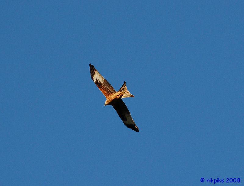 Red Kite 2.