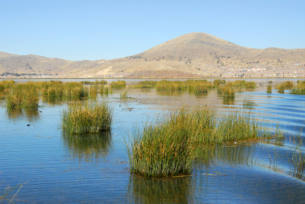 Reeds in the shallows of Lake Titicaca