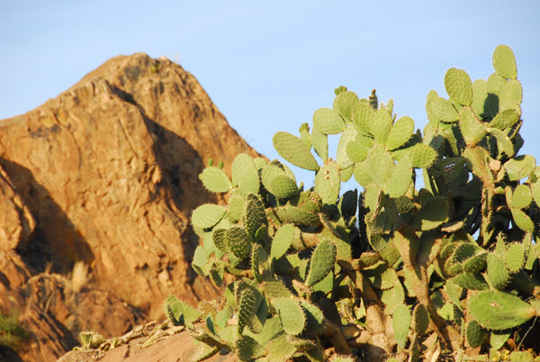 Cactus and rocky peak, Axum