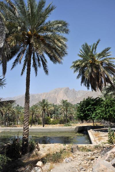 Irrigation pond, Nakhl