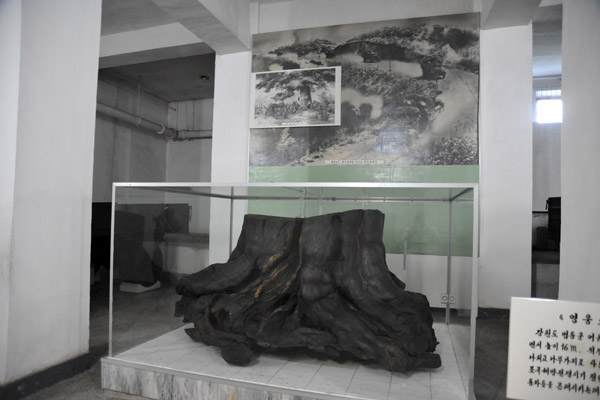 Stump of Heroic Tree that hid many DPRK vehicles from sight of US Imperialist aircraft