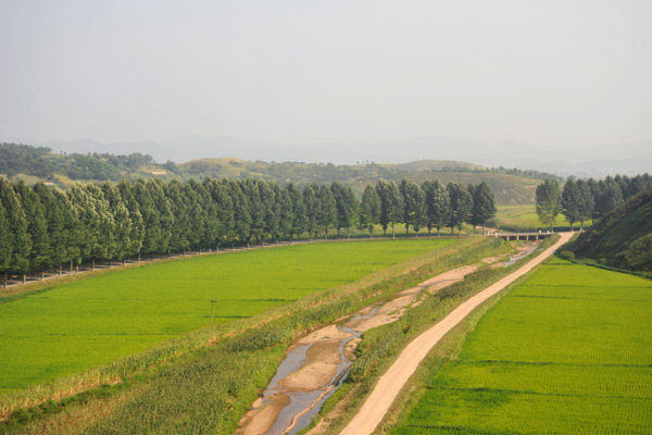 North Korean landscape with a tree-lined road