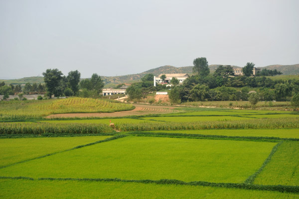Rice paddies and corn fields, North Korea