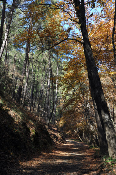 Forest track to Mylikouri - off the beaten path