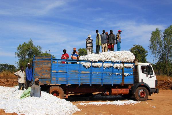 Loading a cotton truck, Mali