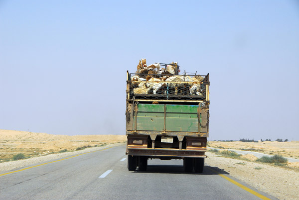 Truck with two decks for transporting sheep