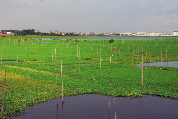 Agriculture along a lake south of Phnom Penh