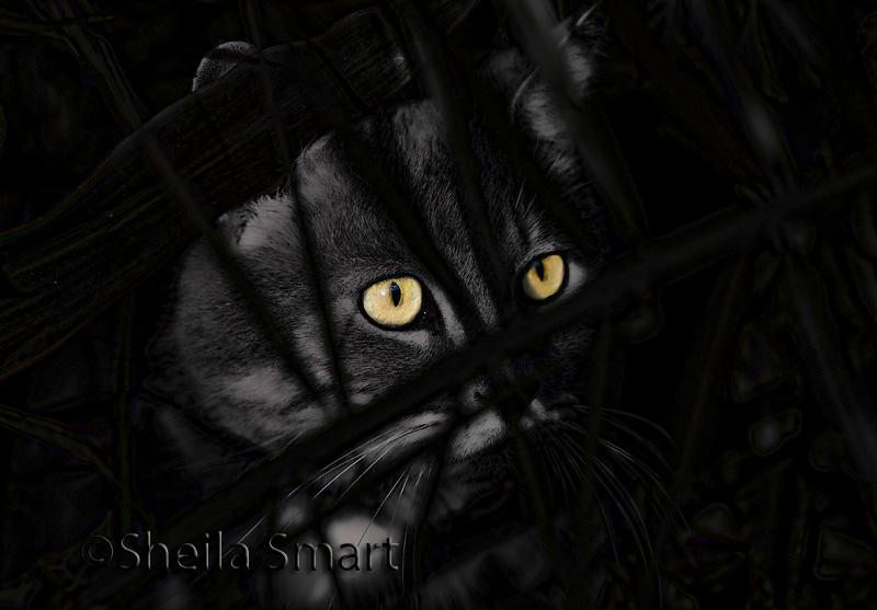 Cat amongst the bushes
