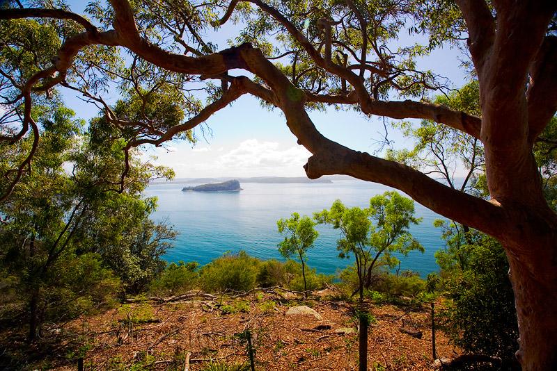 Broken Bay with Sydney red gum