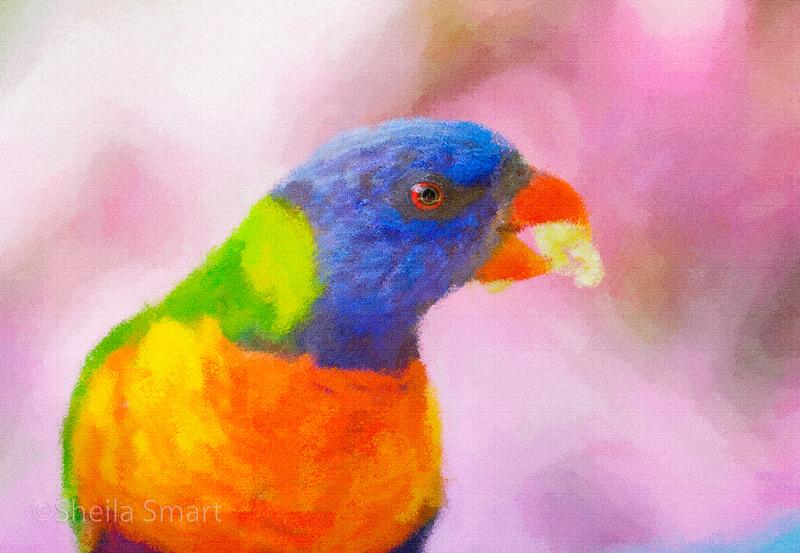 Rainbow lorikeet impressionism