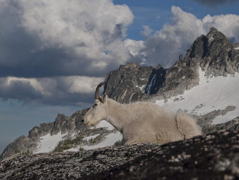 Goat and McClellan Peak