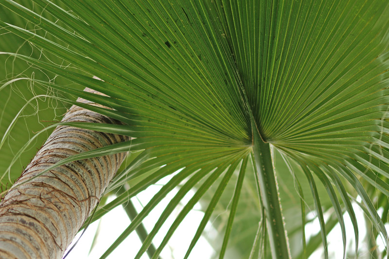 Palm 8427.jpg