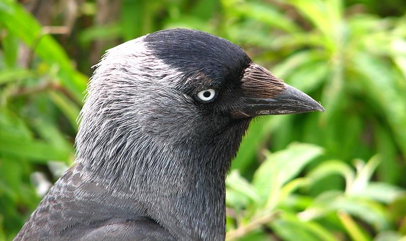 Bird at St Ives. 1.