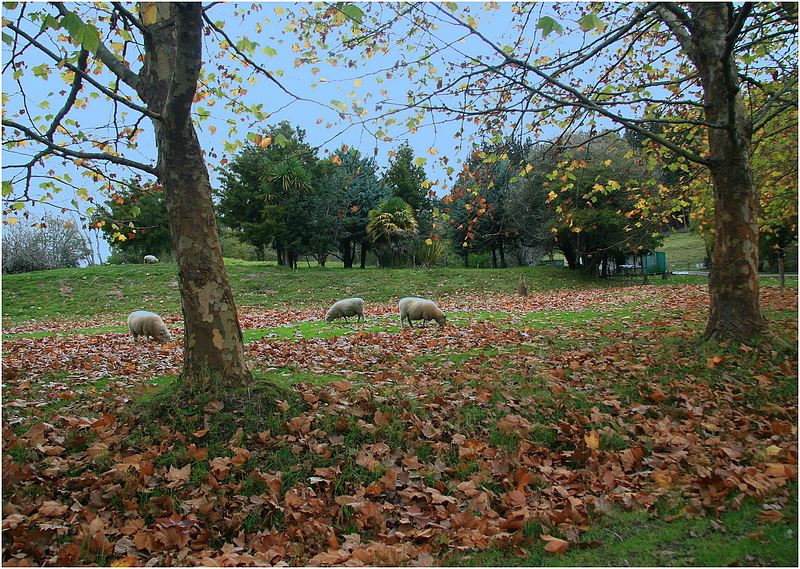 Mahurangi countryside 6.
