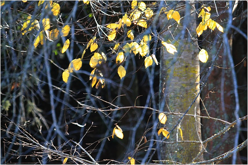Winter leaves.Albany