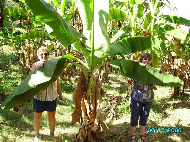 2008 Haiti 025.jpg
