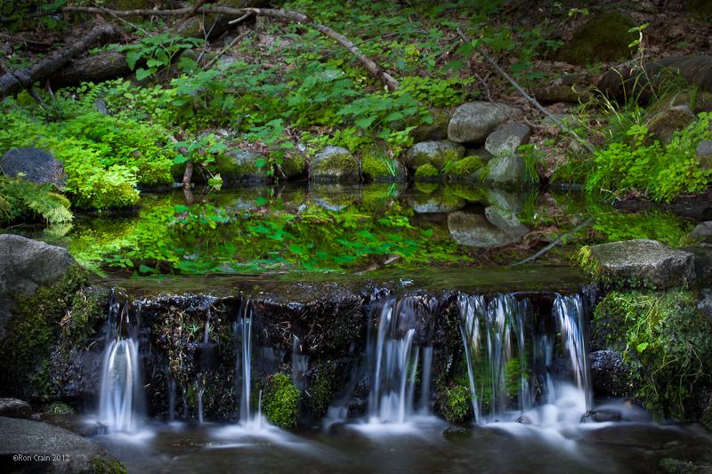 Fern Spring - Yosemite - Ron Crain.jpg