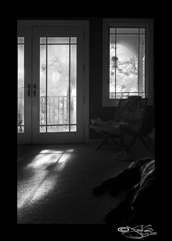 191<br>Dog Day