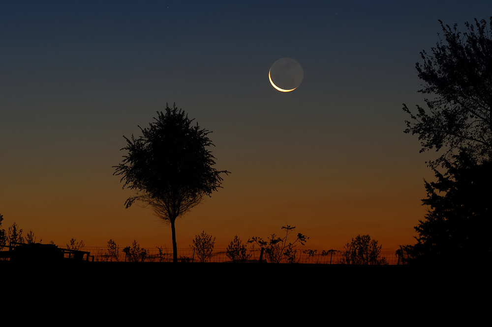 Morning Crescent