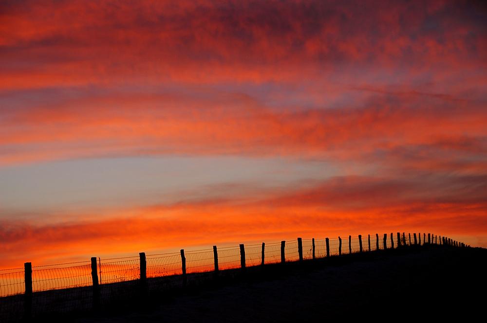 Fencerow Sunset